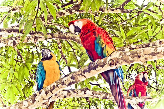 2018��2��5�ճ���ARIA AMAZON ����ѷ�Ӷ����ݻ�����̽��֮�� 7 ���� ���߱�ţ�771712154118